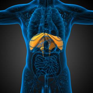 El diafragma en fisioterapia